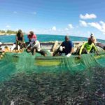 Fishing in Barbados